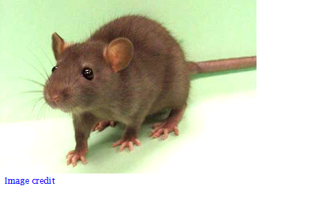 Rats in the garage are a big problem