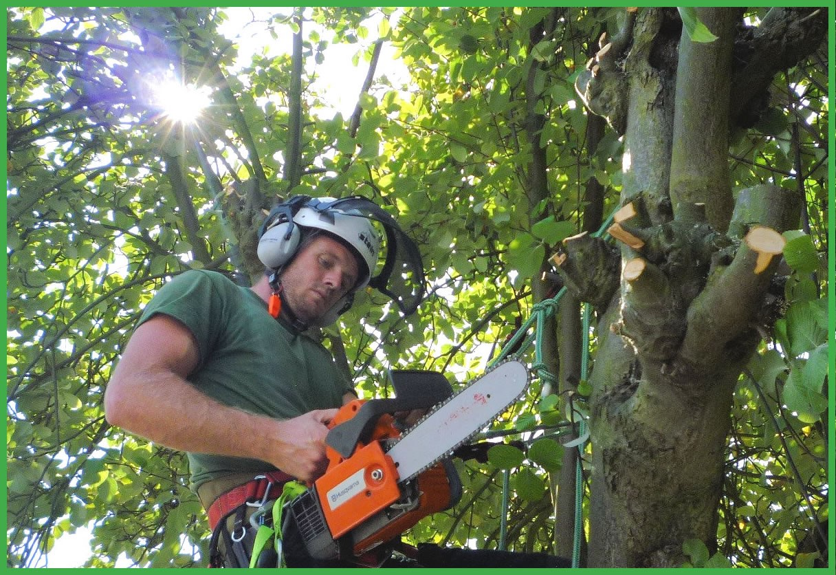 Questions to ask a tree surgeon